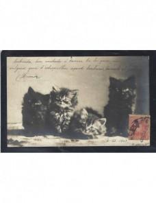 Tarjeta postal ilustrada España gatos España - 1900 a 1930.