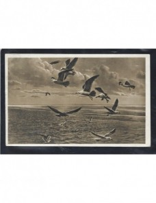 Tarjeta postal ilustrada Alemania fotografía gaviotas Alemania - 1931 a 1950.